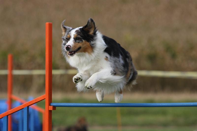 0647d151614bb2 Trening idealnej posłuszności psa: Posłuch w praktyce - Obroza ...