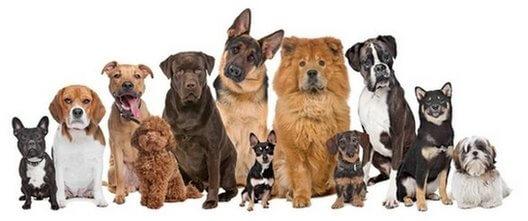 364e47b78624b9 Pokazałeś psy czego od niego oczekujesz? Trening psa, ułatwi Ci także  elektroniczna obroża. Sprawdź czy jej potrzebujesz.