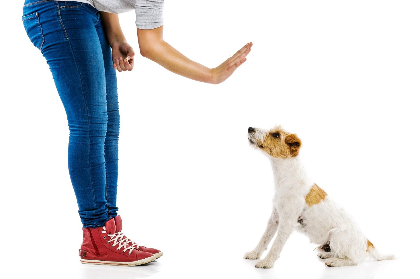 ea46252c5856f6 Komendy dla psa.Tutaj znajdziesz wszystkie, które powinieneś znać ...