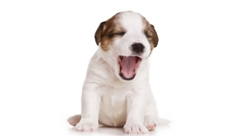 Výsledek obrázku pro štěně