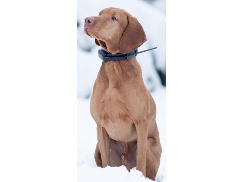 Satelitní GPS lokátor Dogtrace DOG GPS X22 sada pro dva psy + 30 dní na vyzkoušení