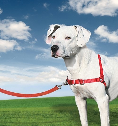 Postroj pro psa EasyWalk + 30 dní na vyzkoušení