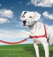 Postroj pro psa EasyWalk