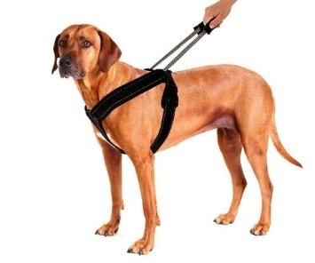 Vodící vodítko/postroj pro psy SportHarness