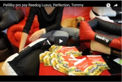 Video recenzia: Peliešky pre psy Reedog Luxus, Tommy, Perfection